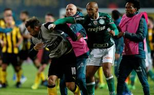 Palmeiras01